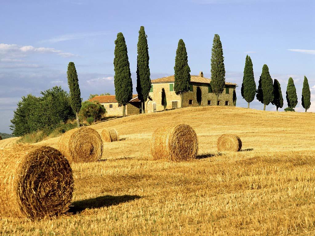 Campo di grano in Toscana